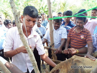 真剣な表情で牛の人口受精の実習に取り組む普及員たち