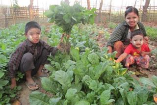 家庭菜園の促進