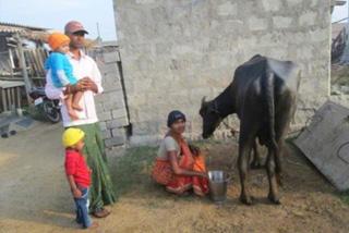 ミルク用の家畜を提供