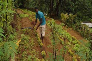 農業プロジェクト