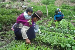 家庭菜園で色々な野菜が作れるようになりました