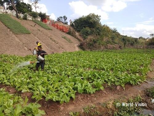 コンゴ民主共和国 地域の様子