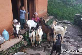 ヤギの飼育研修