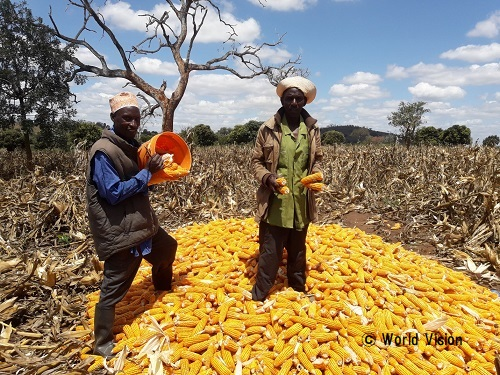 タンザニア 地域の様子
