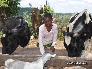 支援された乳牛の世話をするメアリーちゃん