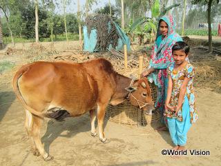 アフサナちゃんは母親と一緒に牛の世話をしています