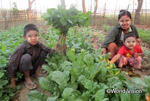 家庭菜園で生活が改善した家族(ミャンマーのタバウンADP)