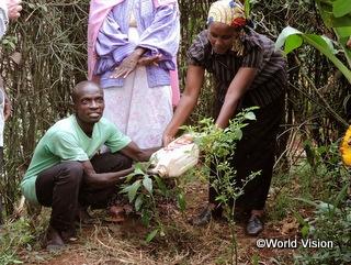 平和再構築「平和の木プロジェクト」の様子