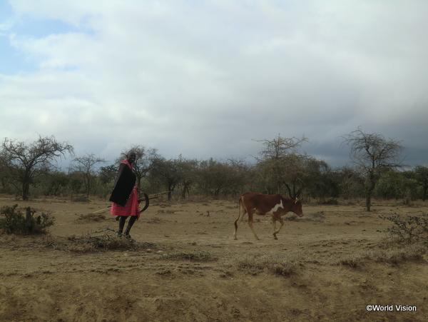 ケニアの支援地域