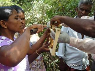 養蜂の研修の様子