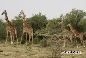 最寄の町からADPまでの道に普通に野生動物がいます